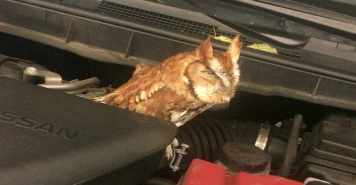 A mechanic in New Hampshire found something surprising under the hood