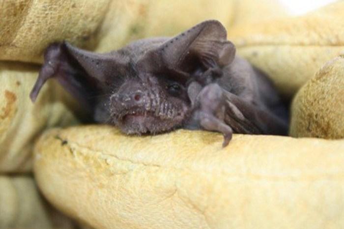 Devastated by Harvey, experts says one Houston's bat colony