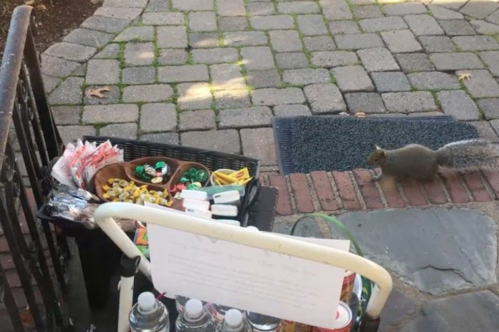 A family wanted to know who was stealing their chocolate, and they caught the furry thief red-handed