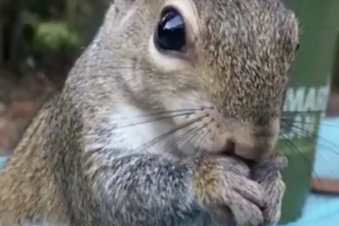 This wild squirrel pays it forward in love