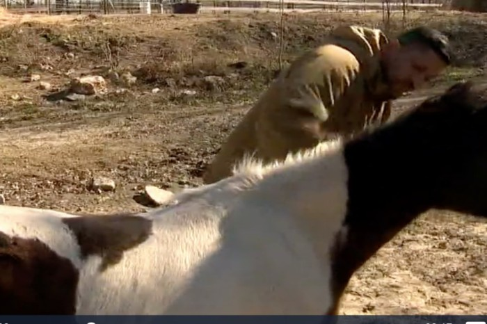 These horses help veterans adjust to life after the battlefield