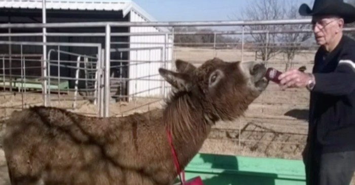 A donkey comes home after being missing for 2 years, and there was only one way to prove it was him