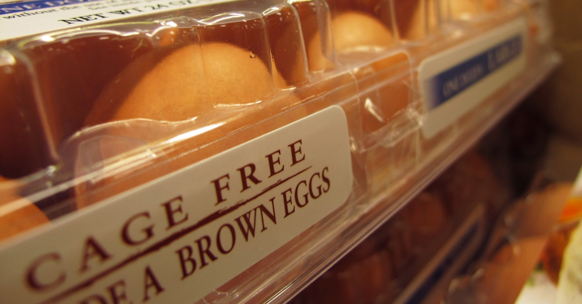 Why are some eggs white and some eggs brown?