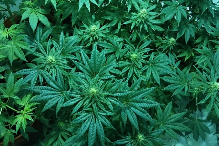 5th grader brought her medical marijuana to school, she was expelled so now her family is now suing the district