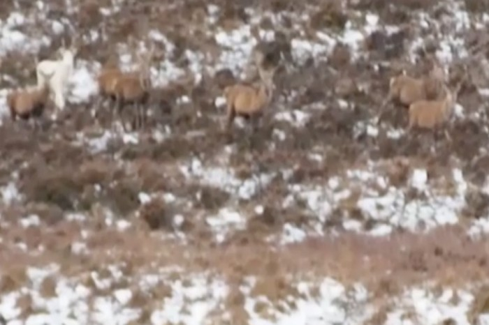 A stag party turned literal when the partygoers spotted a rare creature in the woods