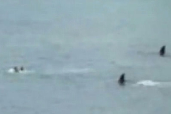 Two kids thought they were dead meat when killer whales swam at them, and we don't blame them