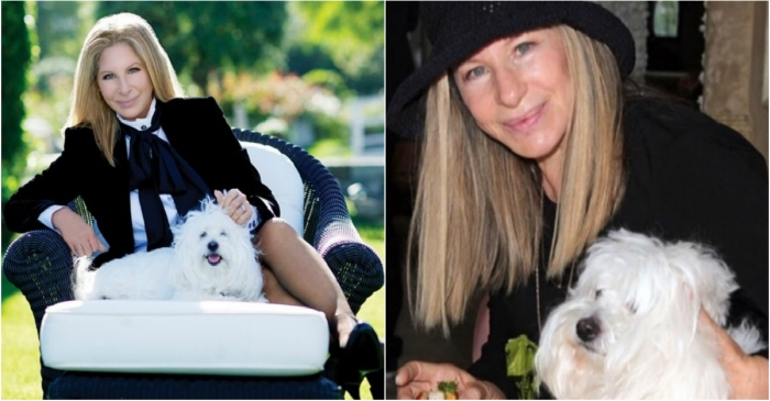 Barbra Streisand was able to successfully clone her beloved dog — twice!