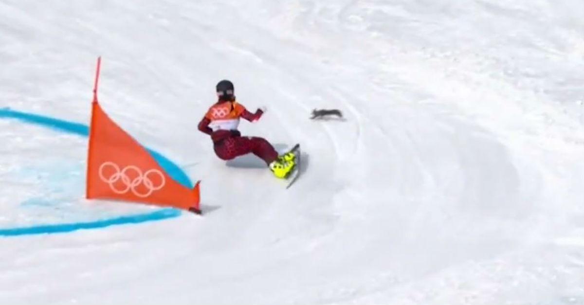 winter olympics squirrel