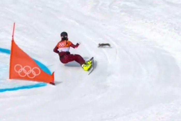 One daredevil squirrel made its Olympic debut by almost being sliced in half by a snowboarder
