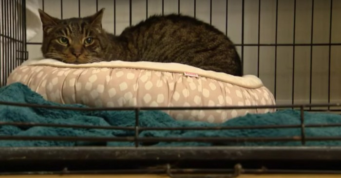 Cat wanders Chicago streets for decade to finally reunite with family