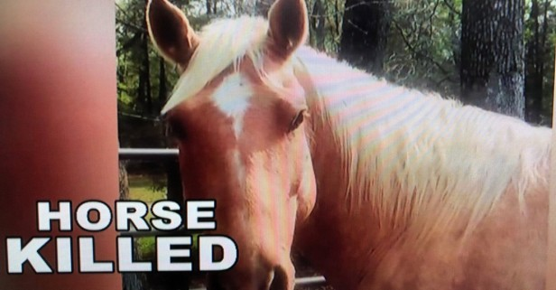 Another one bites the dust in unsolved horse shootings on Liberty County ranch