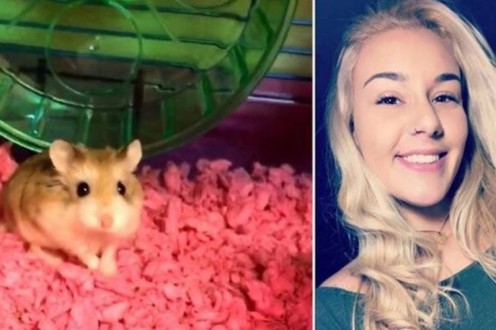 Airline refuses to let woman bring her emotional support hamster on flight