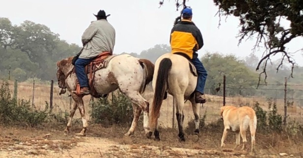 Thousands of riders hit the trails, riding statewide to make it to the Houston Livestock Show and Rodeo