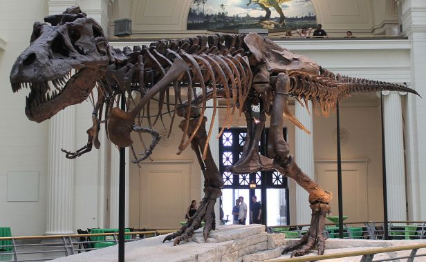 Sue the T-Rex is moving out of Stanley Hall to be replaced by a bigger dino