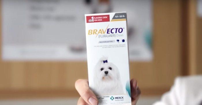 Bravecto Flea Medication Suspected in Numerous Dog Deaths Worldwide