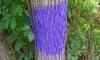 Purple Fenceposts Indiana Law (1)