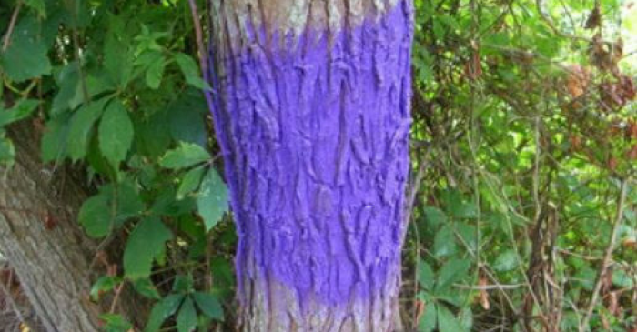 """Indiana Property Owners to Benefit from """"Purple Paint"""" Law"""