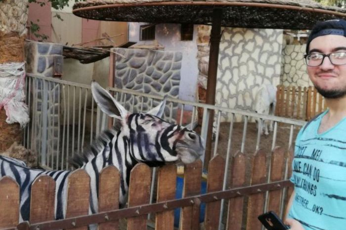Zoo Tried to Paint Stripes on Donkey to Pass Off as Zebra