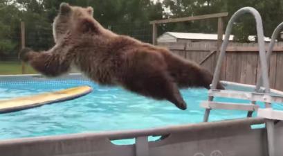 Bear Belly Flops