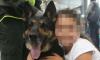 Colombian Drug Sniffing Dog