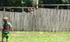 Dog and Boy Play Catch Through Fence