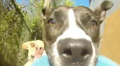 Dog POV Video