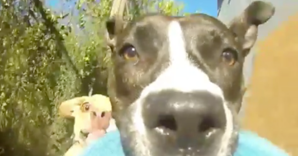 This GoPro Video of a Dog's Face While He's Running is Pure Joy