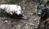 Dog Saves Puppy Washington Tino