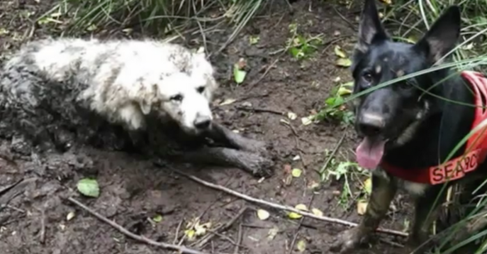 Hero Dog Saves Helpless Puppy Lost in Wilderness for 40 Hours