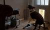 Dog Sprinkler Inside