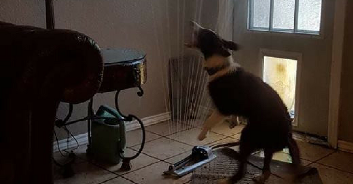 Dog Sprinkler Inside