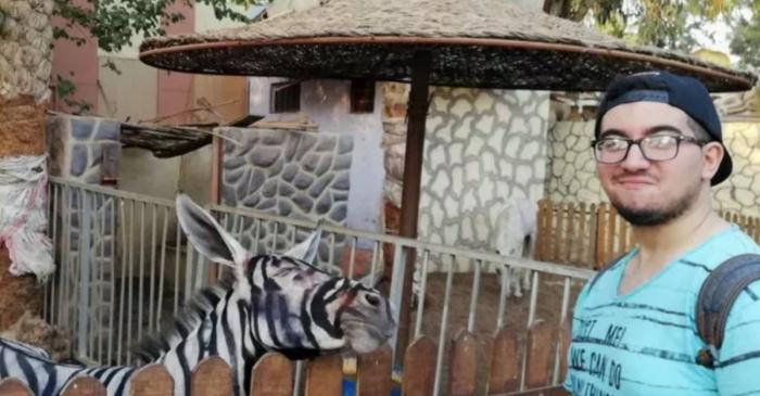 Egyptian Zoo Paints Donkey Like Zebra, Tries to Pass it Off as Zebra