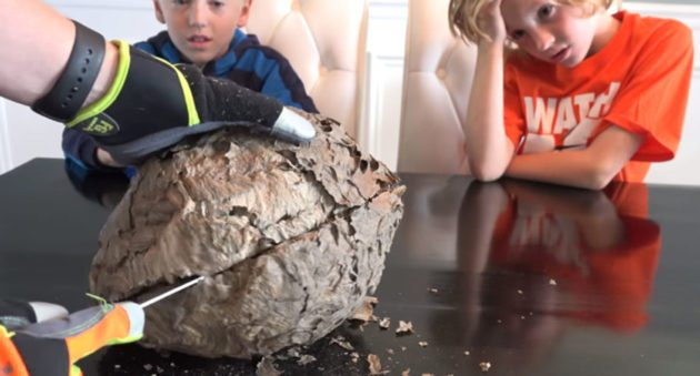 This Is What the Inside of a Gigantic Wasps' Nest Looks Like