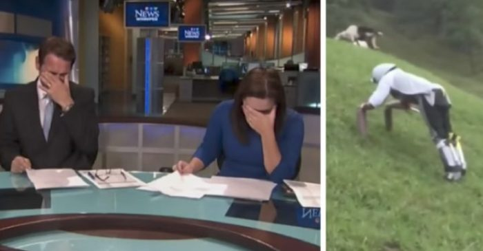 Goat Man Story Causes News Anchor to Lose it on Air