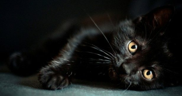 Do Black Cats Have a Hard Time Getting Adopted from Shelters?