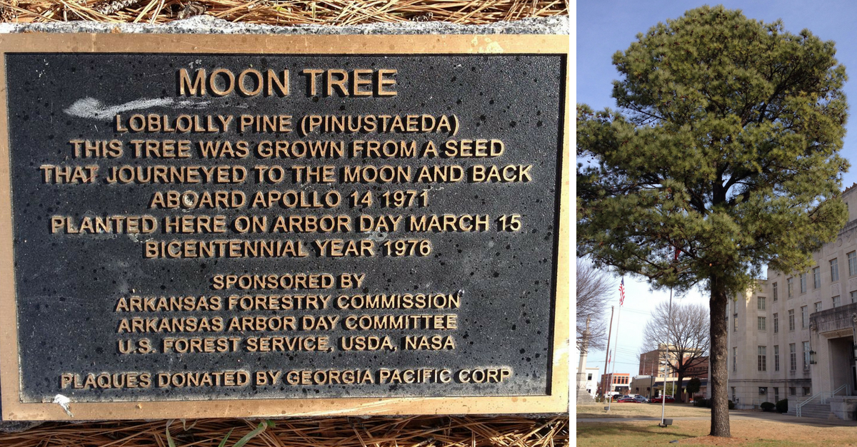 Moon Trees History Where
