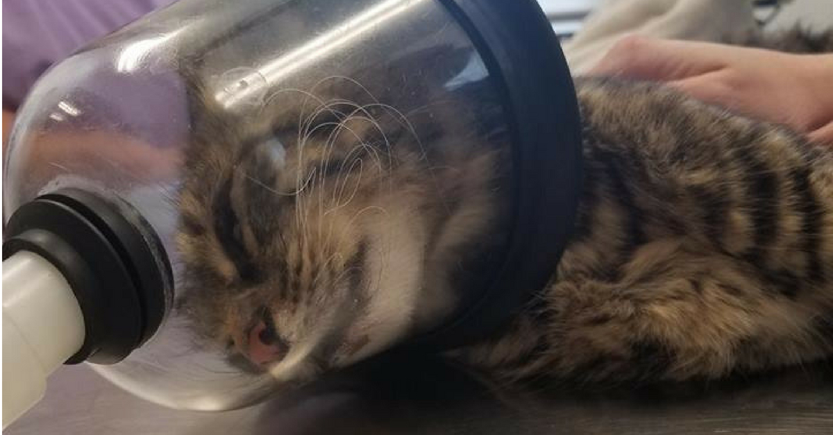 Ohio Cat Recovering After Horrific Firework Attack