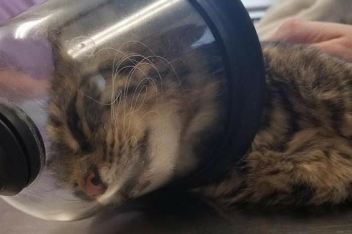 This Cat Is on the Road to Recovery After Suffering Firework Abuse