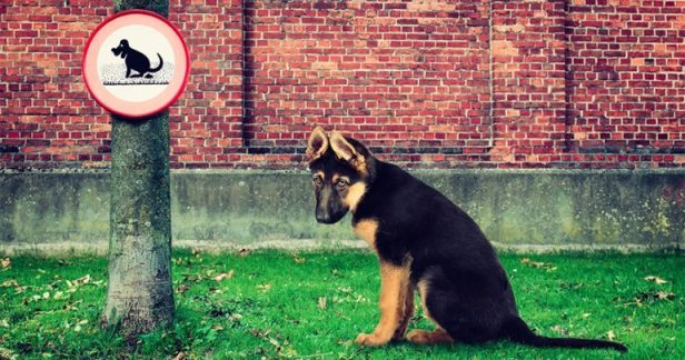 10 Strange Dog Laws You Didn't Know Existed and Are Hard to Believe
