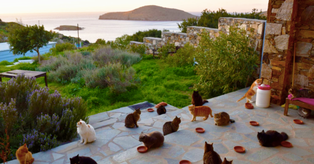 People Got Paid to Cuddle Cats on a Private Greek Island, Seriously