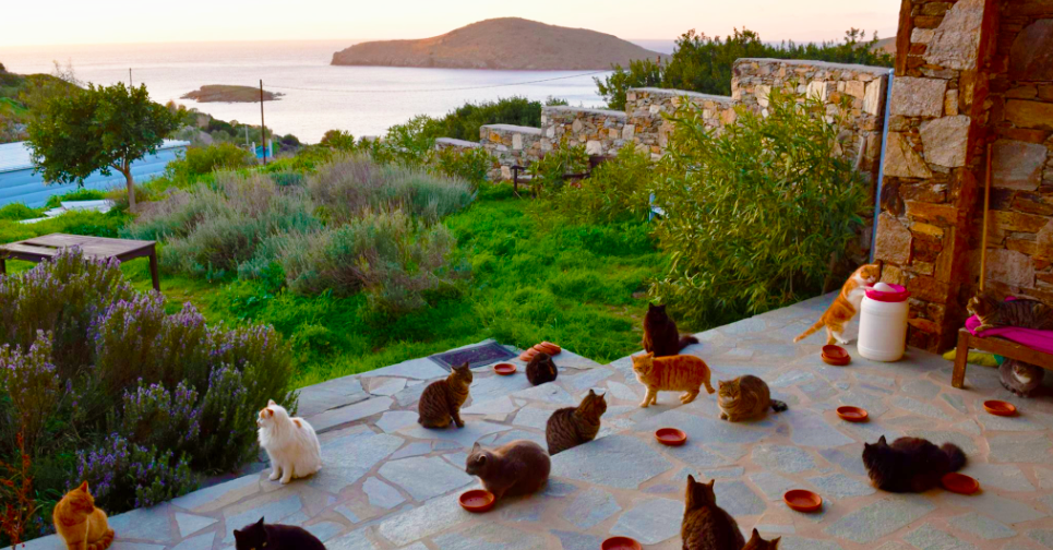 Cat Rescue Greece
