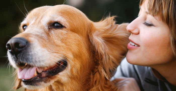 Dogs Understand Human Speech So Much Better Than We Thought