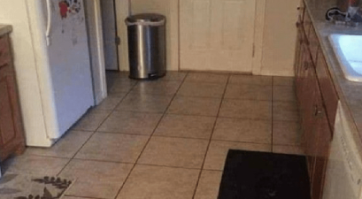 Find Dog In Kitchen
