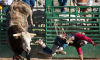Rodeo Bull Escapes Oklahoma City