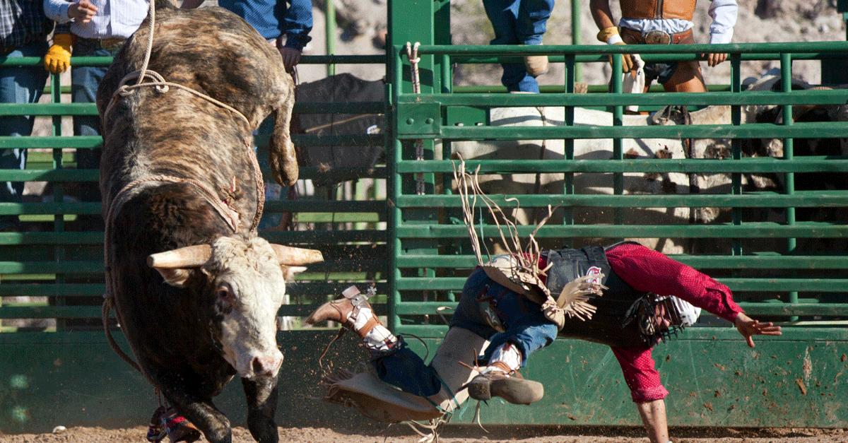 Rodeo Bull Escapes Oklahoma City