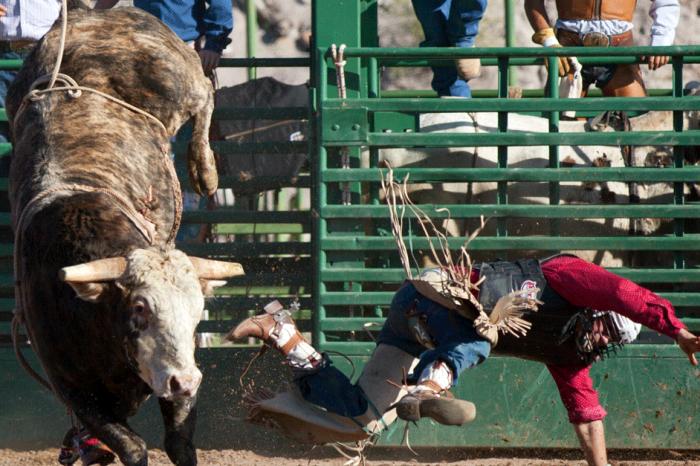 Escaped Rodeo Bull Wreaks Havoc Overnight in Oklahoma City
