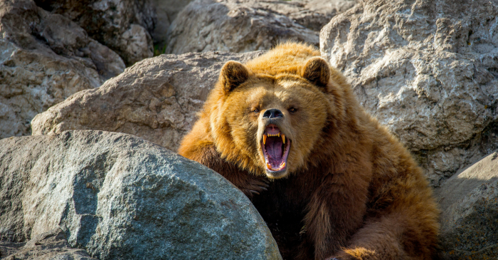 Authorities Have to Cut Bear's Head Off While it was Biting Man's Leg