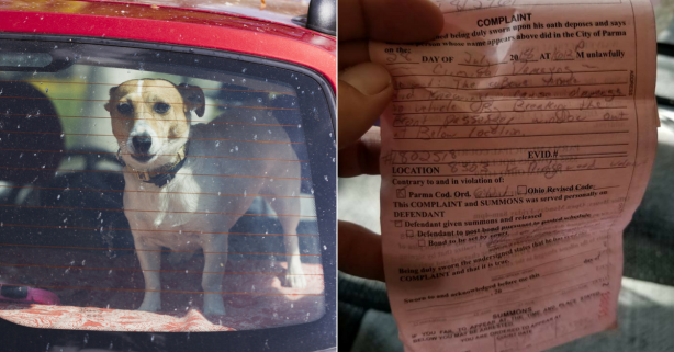 Man Gets Criminal Citation for Breaking into 'Hot Car' to Save 2 Dogs