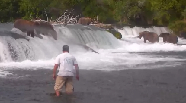 Man Risks Life To Take Selfie With Bears and Is Now Facing Charges