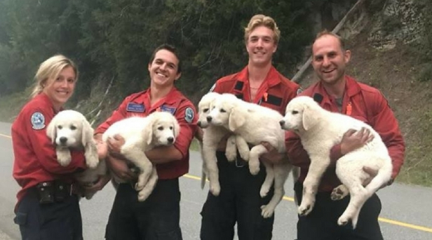 World's Most Attractive Firefighters Save Lost Puppies